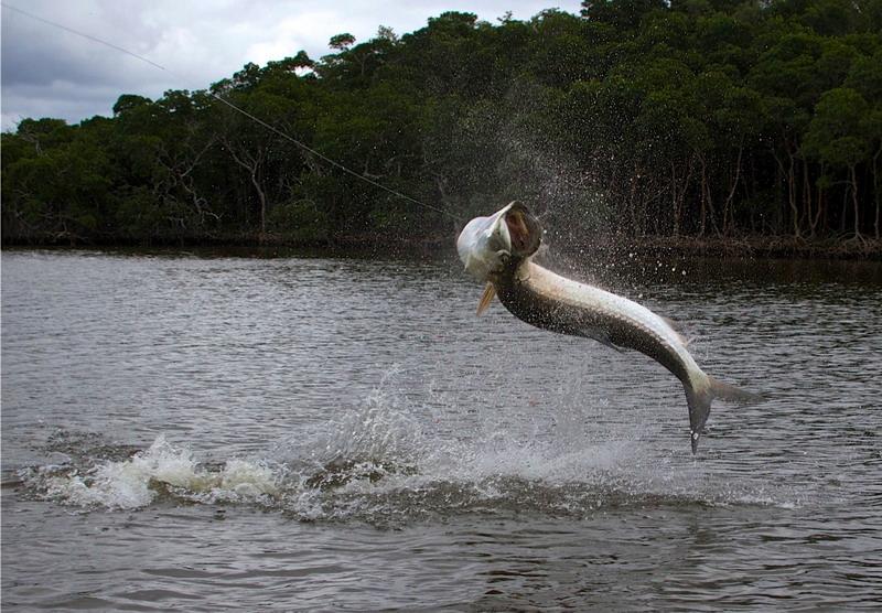 fishing superstars red hook Fishing superstars : season5 538 adlı dosyayı aptoide'a indirin virüs ve malware yok ek bir ücret bulunmuyor.